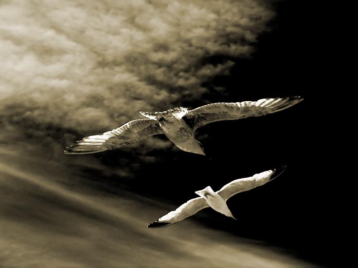 I dream of flying
