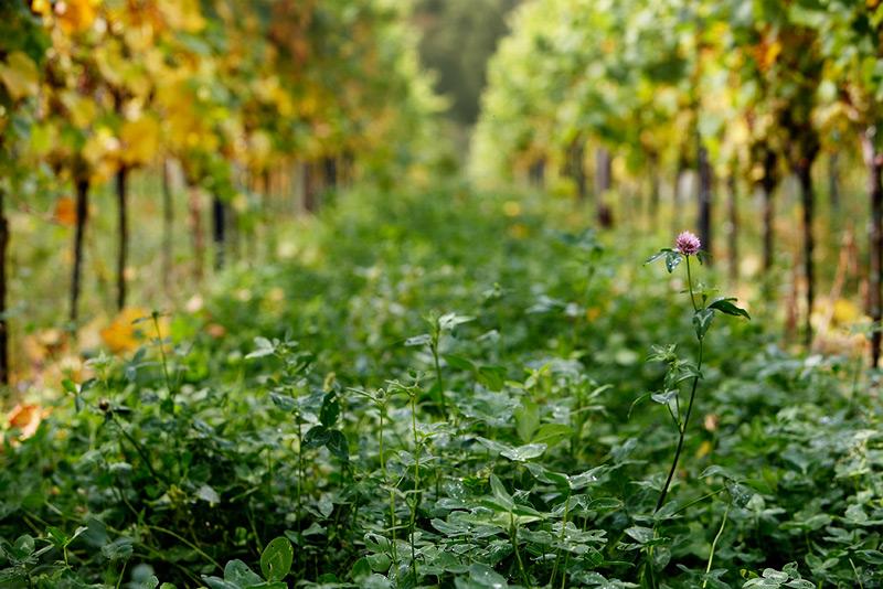 between the vines #2