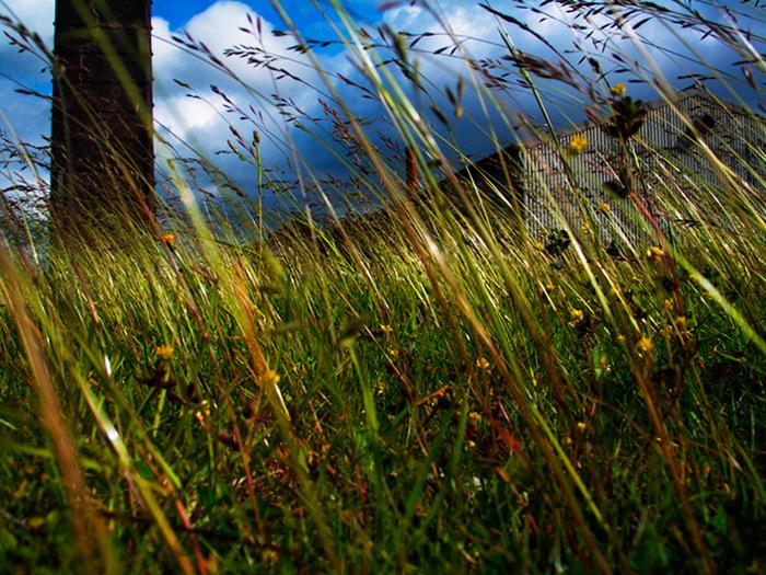 Photo Friday: Landscape