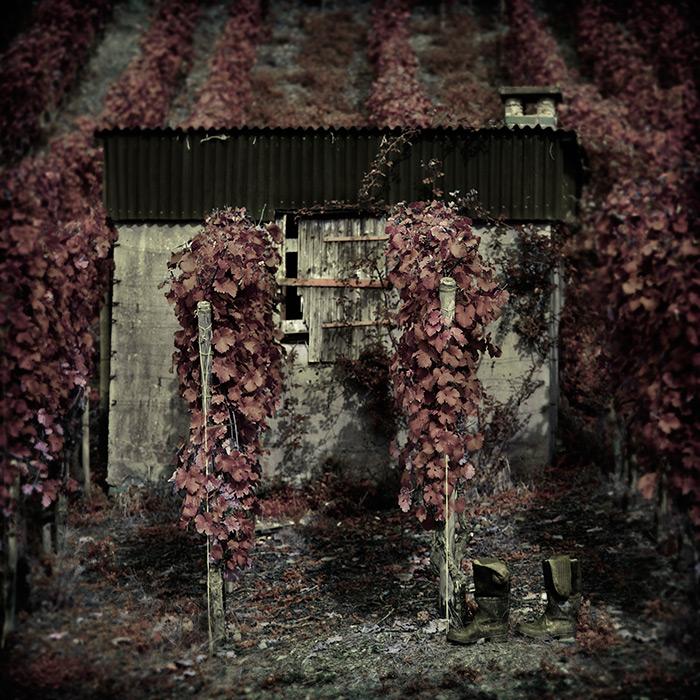 the vineyard dreams