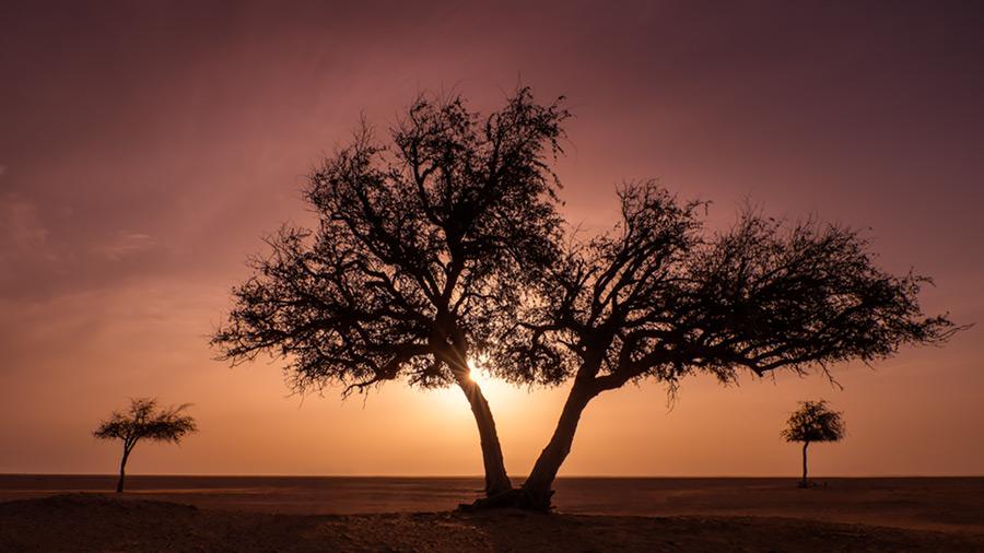 Three trees, Oman