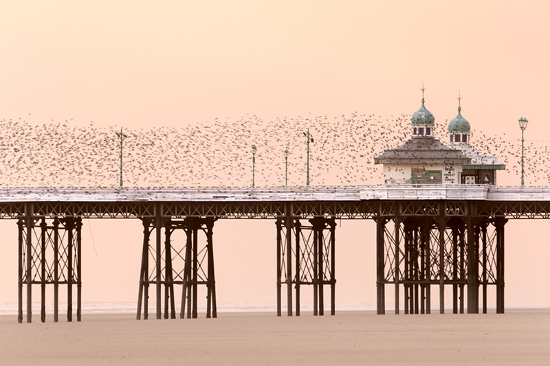 winter's flight / 3x2 + piers [North pier] + fylde coast [scenic]